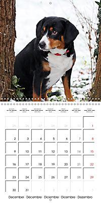 Entlebuch Mountain Dogs (Wall Calendar 2019 300 × 300 mm Square) - Produktdetailbild 12
