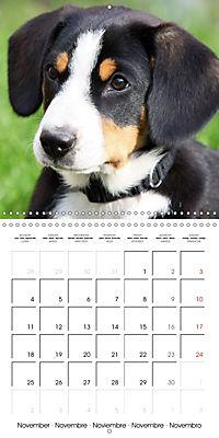 Entlebuch Mountain Dogs (Wall Calendar 2019 300 × 300 mm Square) - Produktdetailbild 11