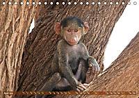 Entspanntes Affenleben (Tischkalender 2019 DIN A5 quer) - Produktdetailbild 4