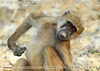Entspanntes Affenleben (Tischkalender 2019 DIN A5 quer) - Produktdetailbild 2