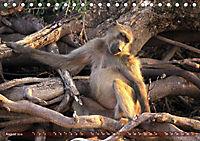 Entspanntes Affenleben (Tischkalender 2019 DIN A5 quer) - Produktdetailbild 8