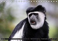 Entspanntes Affenleben (Tischkalender 2019 DIN A5 quer) - Produktdetailbild 7