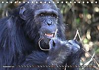 Entspanntes Affenleben (Tischkalender 2019 DIN A5 quer) - Produktdetailbild 9