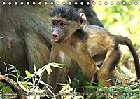 Entspanntes Affenleben (Tischkalender 2019 DIN A5 quer) - Produktdetailbild 10