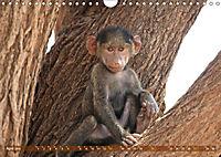 Entspanntes Affenleben (Wandkalender 2019 DIN A4 quer) - Produktdetailbild 4