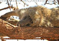 Entspanntes Affenleben (Wandkalender 2019 DIN A4 quer) - Produktdetailbild 12
