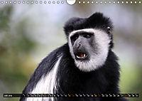 Entspanntes Affenleben (Wandkalender 2019 DIN A4 quer) - Produktdetailbild 7