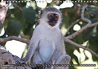 Entspanntes Affenleben (Wandkalender 2019 DIN A4 quer) - Produktdetailbild 11
