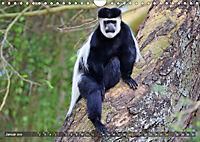 Entspanntes Affenleben (Wandkalender 2019 DIN A4 quer) - Produktdetailbild 1