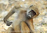 Entspanntes Affenleben (Wandkalender 2019 DIN A4 quer) - Produktdetailbild 2