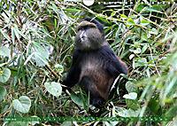 Entspanntes Affenleben (Wandkalender 2019 DIN A4 quer) - Produktdetailbild 6