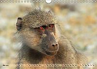 Entspanntes Affenleben (Wandkalender 2019 DIN A4 quer) - Produktdetailbild 5
