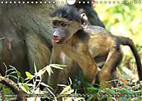 Entspanntes Affenleben (Wandkalender 2019 DIN A4 quer) - Produktdetailbild 10