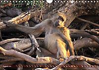 Entspanntes Affenleben (Wandkalender 2019 DIN A4 quer) - Produktdetailbild 8