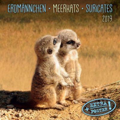 Erdmännchen / Merkats / Suricates 2019