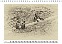 Erinnerungen an Ursina und Berna. Die Bärenkinder von Bern. Alte Fotos (Wandkalender 2019 DIN A4 quer) - Produktdetailbild 6