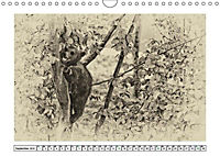 Erinnerungen an Ursina und Berna. Die Bärenkinder von Bern. Alte Fotos (Wandkalender 2019 DIN A4 quer) - Produktdetailbild 9