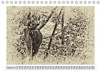 Erinnerungen an Ursina und Berna. Die Bärenkinder von Bern. Alte Fotos (Tischkalender 2019 DIN A5 quer) - Produktdetailbild 9