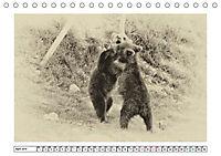 Erinnerungen an Ursina und Berna. Die Bärenkinder von Bern. Alte Fotos (Tischkalender 2019 DIN A5 quer) - Produktdetailbild 4