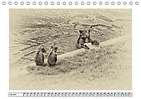 Erinnerungen an Ursina und Berna. Die Bärenkinder von Bern. Alte Fotos (Tischkalender 2019 DIN A5 quer) - Produktdetailbild 7