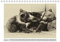 Erinnerungen an Ursina und Berna. Die Bärenkinder von Bern. Alte Fotos (Tischkalender 2019 DIN A5 quer) - Produktdetailbild 10