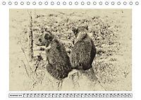 Erinnerungen an Ursina und Berna. Die Bärenkinder von Bern. Alte Fotos (Tischkalender 2019 DIN A5 quer) - Produktdetailbild 11