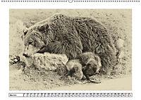 Erinnerungen an Ursina und Berna. Die Bärenkinder von Bern. Alte Fotos (Wandkalender 2019 DIN A2 quer) - Produktdetailbild 5