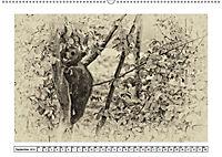 Erinnerungen an Ursina und Berna. Die Bärenkinder von Bern. Alte Fotos (Wandkalender 2019 DIN A2 quer) - Produktdetailbild 9