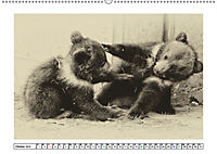 Erinnerungen an Ursina und Berna. Die Bärenkinder von Bern. Alte Fotos (Wandkalender 2019 DIN A2 quer) - Produktdetailbild 10