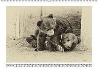 Erinnerungen an Ursina und Berna. Die Bärenkinder von Bern. Alte Fotos (Wandkalender 2019 DIN A2 quer) - Produktdetailbild 2