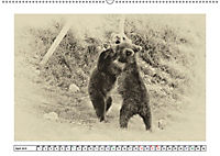 Erinnerungen an Ursina und Berna. Die Bärenkinder von Bern. Alte Fotos (Wandkalender 2019 DIN A2 quer) - Produktdetailbild 4