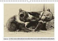 Erinnerungen an Ursina und Berna. Die Bärenkinder von Bern. Alte Fotos (Wandkalender 2019 DIN A4 quer) - Produktdetailbild 10
