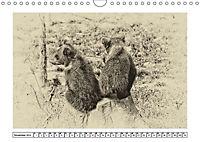 Erinnerungen an Ursina und Berna. Die Bärenkinder von Bern. Alte Fotos (Wandkalender 2019 DIN A4 quer) - Produktdetailbild 11