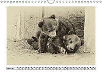 Erinnerungen an Ursina und Berna. Die Bärenkinder von Bern. Alte Fotos (Wandkalender 2019 DIN A4 quer) - Produktdetailbild 2
