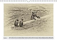 Erinnerungen an Ursina und Berna. Die Bärenkinder von Bern. Alte Fotos (Wandkalender 2019 DIN A4 quer) - Produktdetailbild 7
