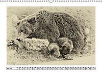 Erinnerungen an Ursina und Berna. Die Bärenkinder von Bern. Alte Fotos (Wandkalender 2019 DIN A3 quer) - Produktdetailbild 5