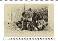 Erinnerungen an Ursina und Berna. Die Bärenkinder von Bern. Alte Fotos (Wandkalender 2019 DIN A3 quer) - Produktdetailbild 2