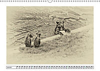 Erinnerungen an Ursina und Berna. Die Bärenkinder von Bern. Alte Fotos (Wandkalender 2019 DIN A3 quer) - Produktdetailbild 7