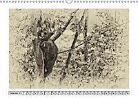 Erinnerungen an Ursina und Berna. Die Bärenkinder von Bern. Alte Fotos (Wandkalender 2019 DIN A3 quer) - Produktdetailbild 9