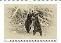 Erinnerungen an Ursina und Berna. Die Bärenkinder von Bern. Alte Fotos (Wandkalender 2019 DIN A3 quer) - Produktdetailbild 4