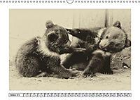 Erinnerungen an Ursina und Berna. Die Bärenkinder von Bern. Alte Fotos (Wandkalender 2019 DIN A3 quer) - Produktdetailbild 10
