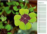 Es grünt so grün (Wandkalender 2019 DIN A3 quer) - Produktdetailbild 1