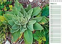 Es grünt so grün (Wandkalender 2019 DIN A4 quer) - Produktdetailbild 3