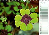 Es grünt so grün (Wandkalender 2019 DIN A4 quer) - Produktdetailbild 1