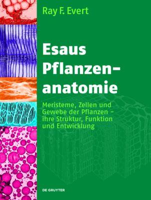 Esaus Pflanzenanatomie Buch bei Weltbild.de online bestellen