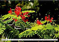 ESCAMBRAY - Kubas grünes Herz (Wandkalender 2019 DIN A2 quer) - Produktdetailbild 12