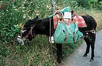 Esel - Wanderungen im Limousin - Produktdetailbild 3