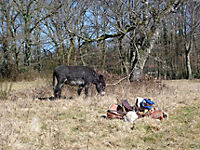Esel - Wanderungen im Limousin - Produktdetailbild 6