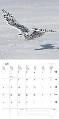 Eulen / Owls 2019 - Produktdetailbild 1