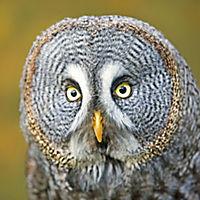 Eulen / Owls 2019 - Produktdetailbild 9